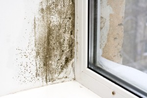 Keeping workers safe from mold
