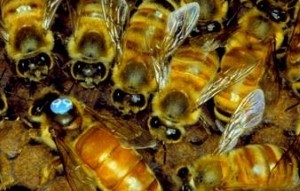 Protect workers against wasp, hornet, and bee stings